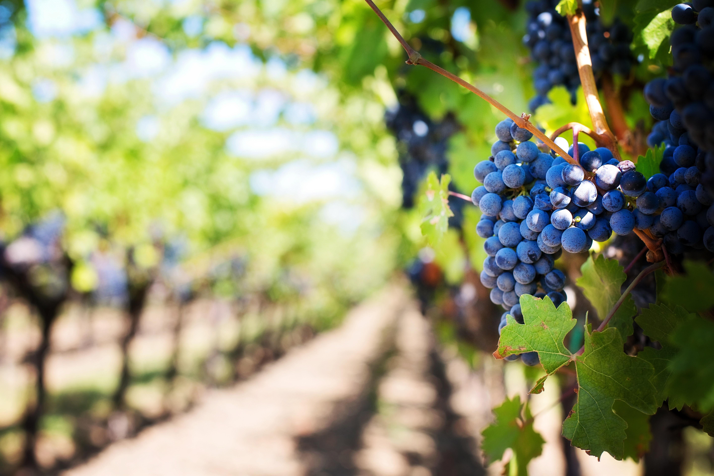 Interview mit Annette Rosencreutz | Rosencreutz Wine Co.
